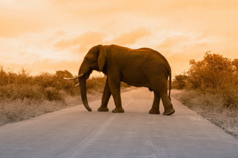 Closed Online Marketing Selling Cycle-The elephant as the giant of the online marketing!