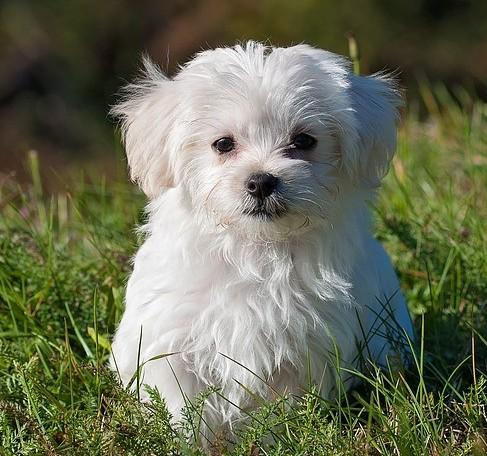 white fluffy dog in grass