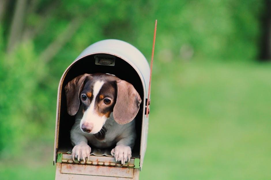puppy inside mailbox