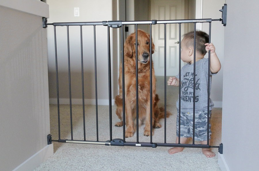 dog and baby behind gate