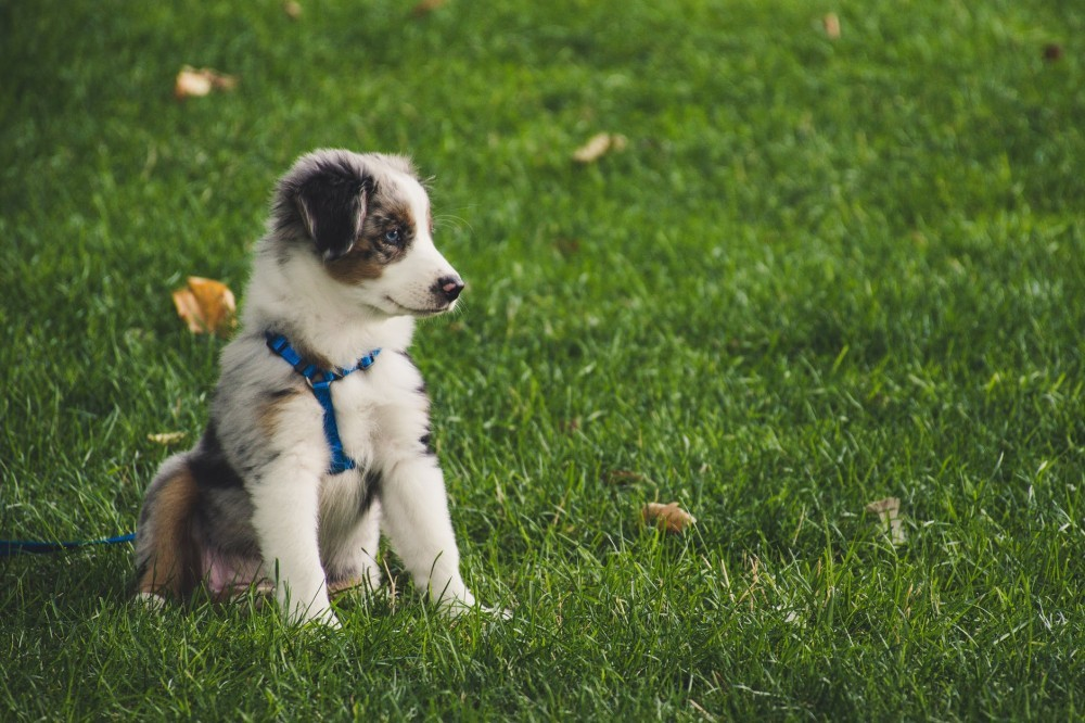 puppy wearing leash and harness