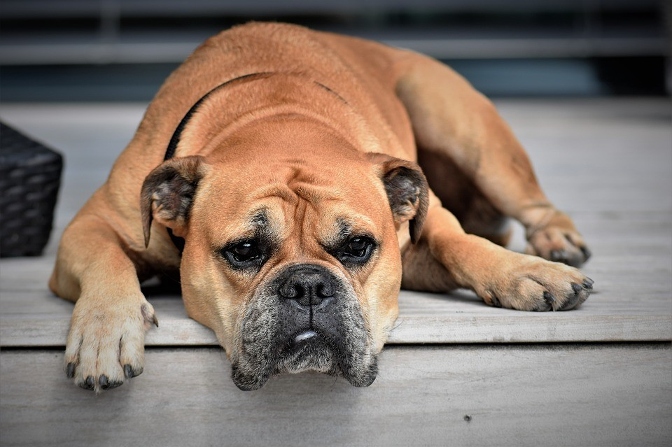 tired dog lying on steps