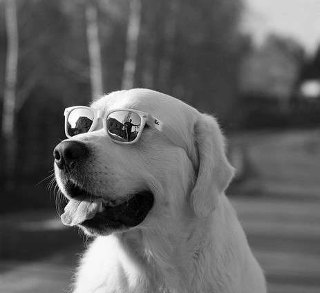 lets review - dog wearing glasses