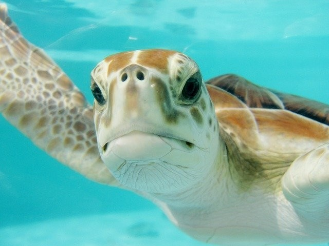 Close up of a sea turtle.