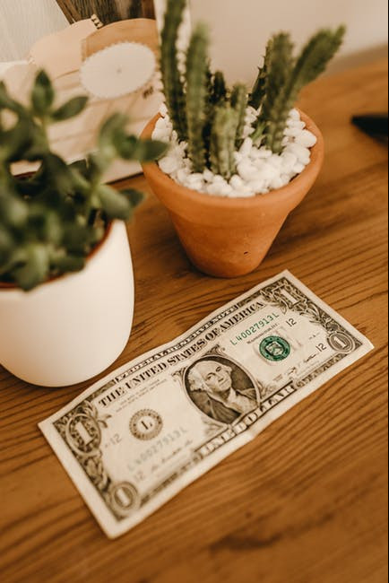 Two flowerpots with cactuses and a dollar bill below them.