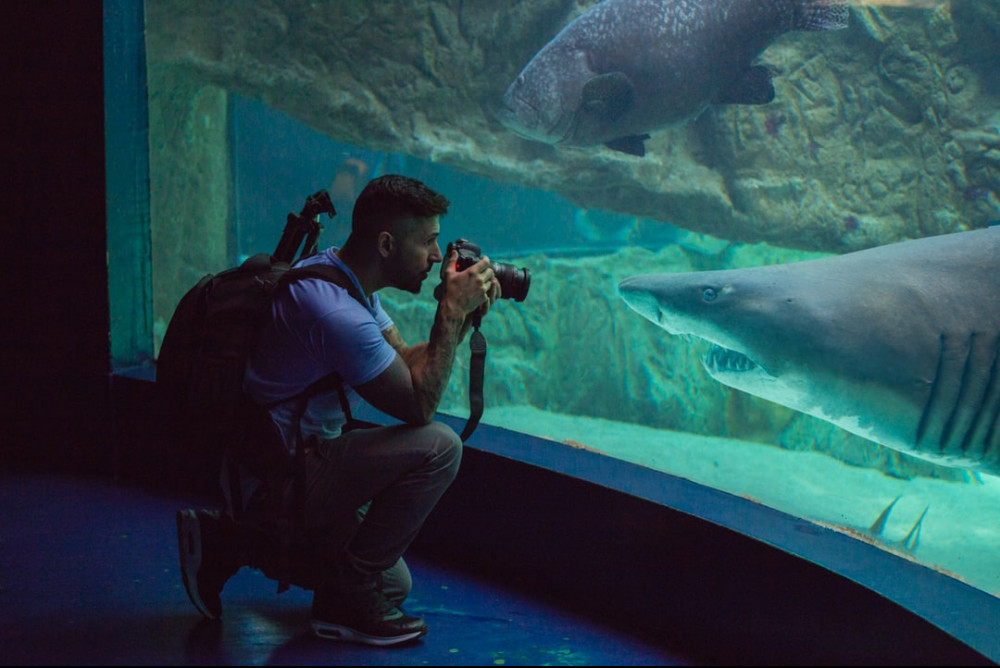 Young man kneeling down and taking a close picture of a shark at the aquarium.