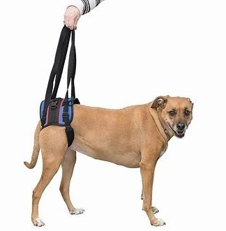 Rear End Dissabled Harnesses For Dogs