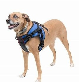 Front End Disabled Harnesses For Dogs