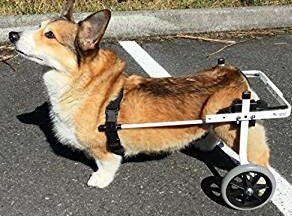 K-9 Disabled Harnesses For Dogs