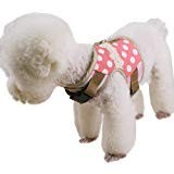 This Cute Little Harness Is Second Best Reviews For Cat Harnesses