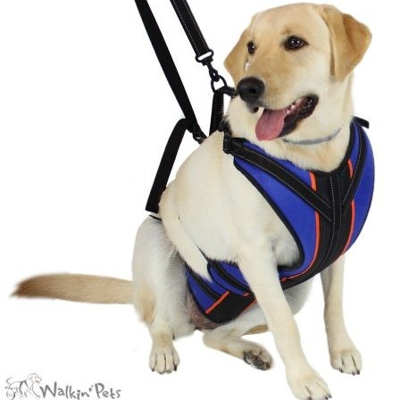 Total Body Disabled HarnessesWheelchairs For Dogs
