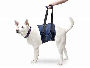 Try The Midsection Disabled Harnesses For Dogs