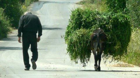 working-donkeys-in-Crete