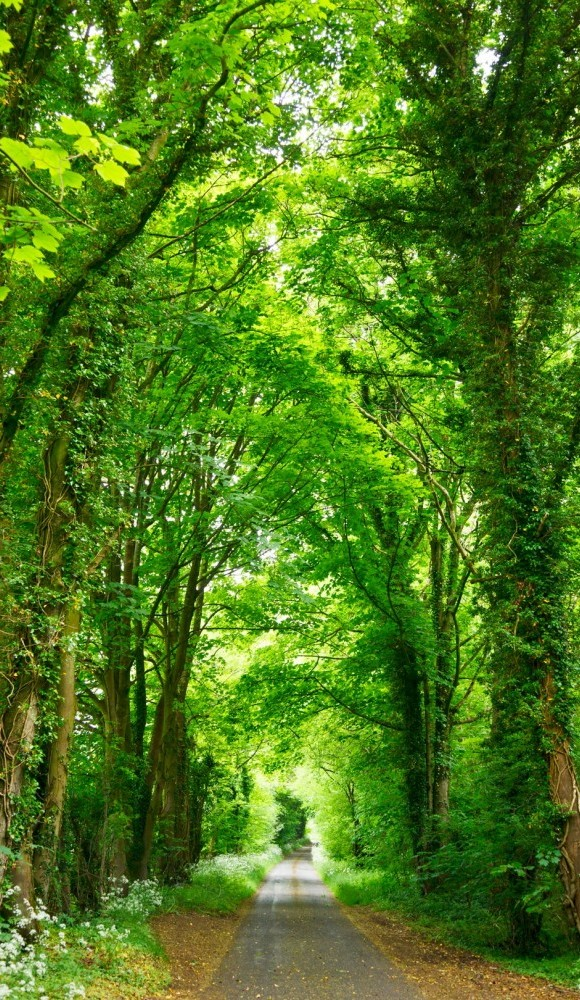 walking and hiking safety tips, image shows a path with tall green trees on either side
