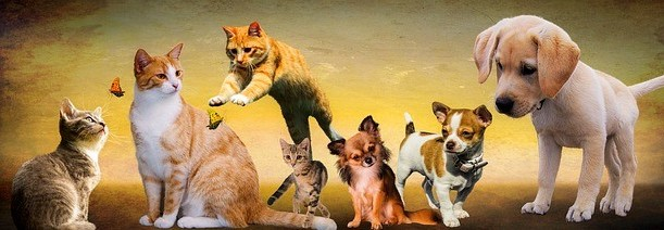 moving to Crete image of cats and dogs