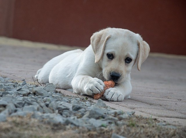 how to help the homeless dogs and cats of Crete, image of a white puppy