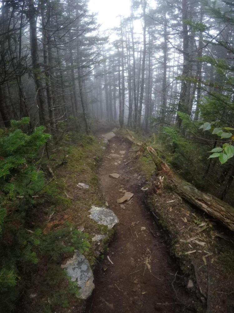 Perfect single track trail headed to Mount Hancock