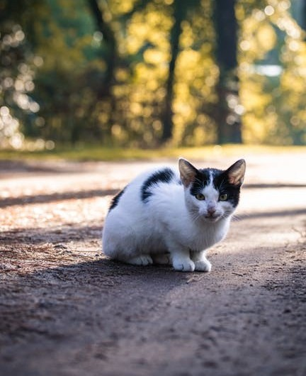 A feral white and black cat outside on a road