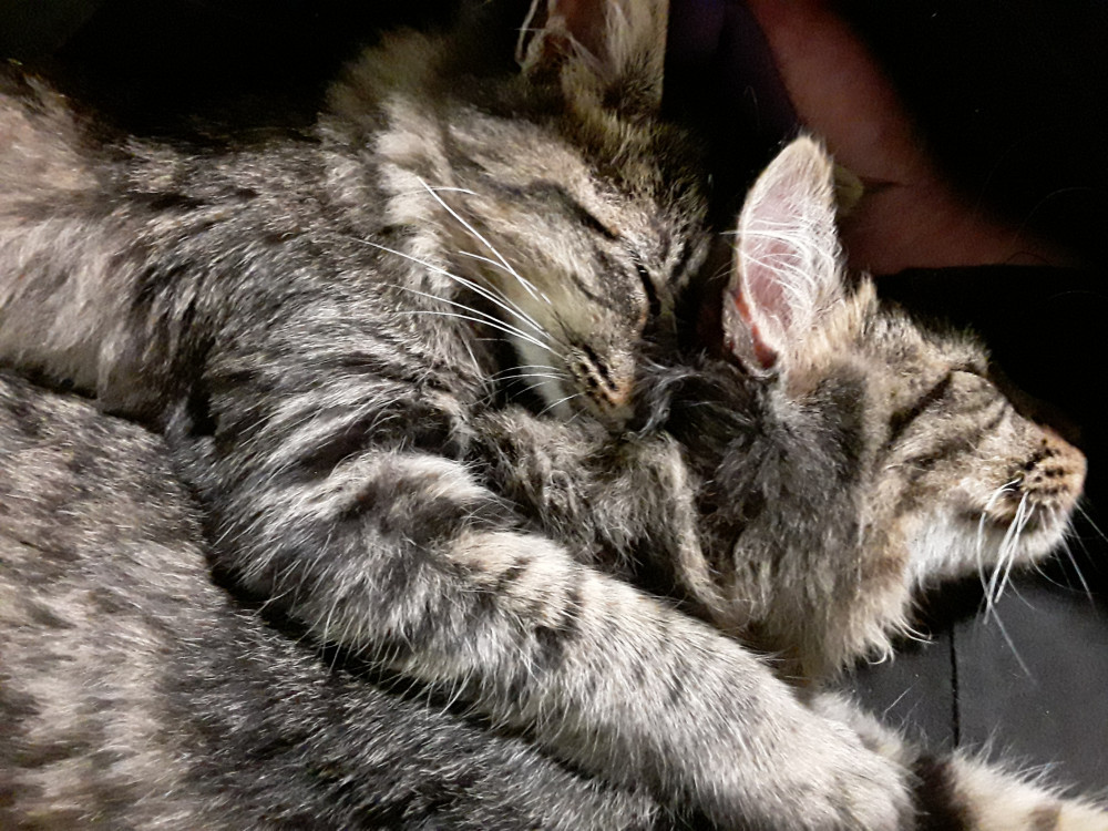 Luke (bottom) and Leia (top) cuddling!