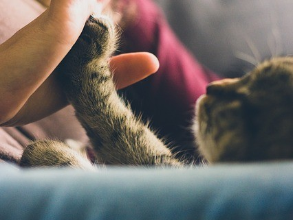 Happy Kitten High Five