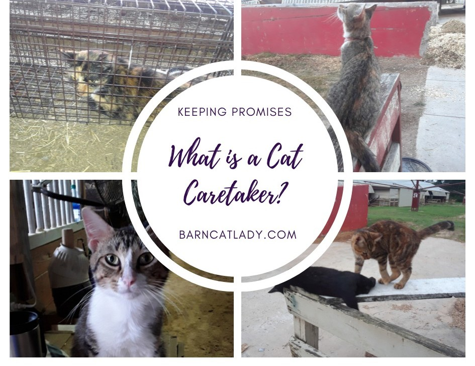 What is a Cat Caretaker Photo Collage