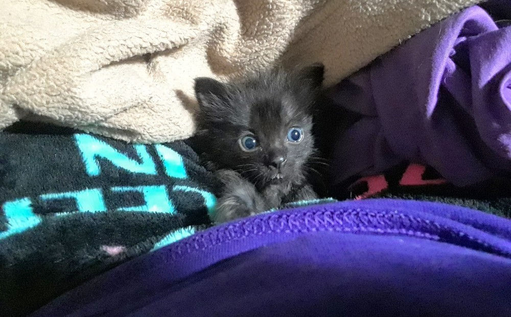 Peabody at 4 Weeks with wide blue eyes!