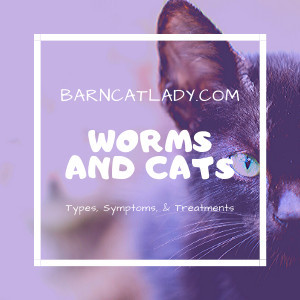Worms and Cats: Types, Symptoms, & Treatments