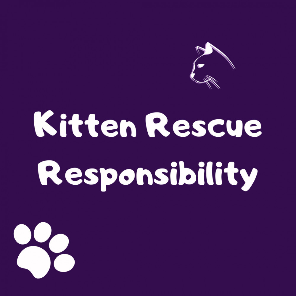 Kitten Rescue Responsibility: Abandoned Kitten Care Guide
