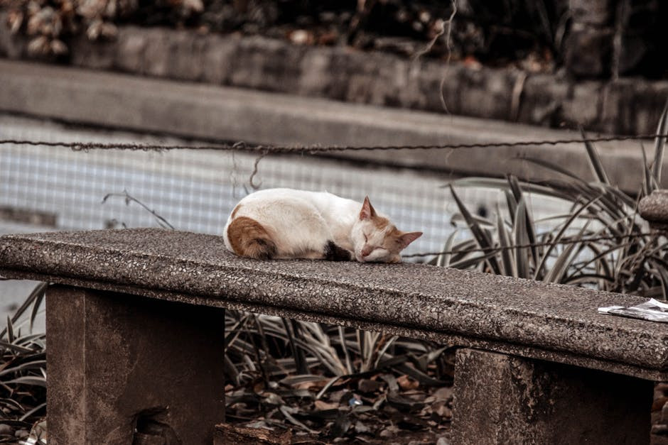 Abandoned cat on a stone park bench