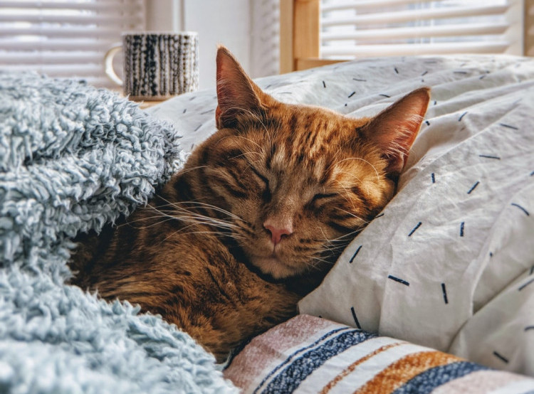 Sick Cat Resting in Owner's Bed