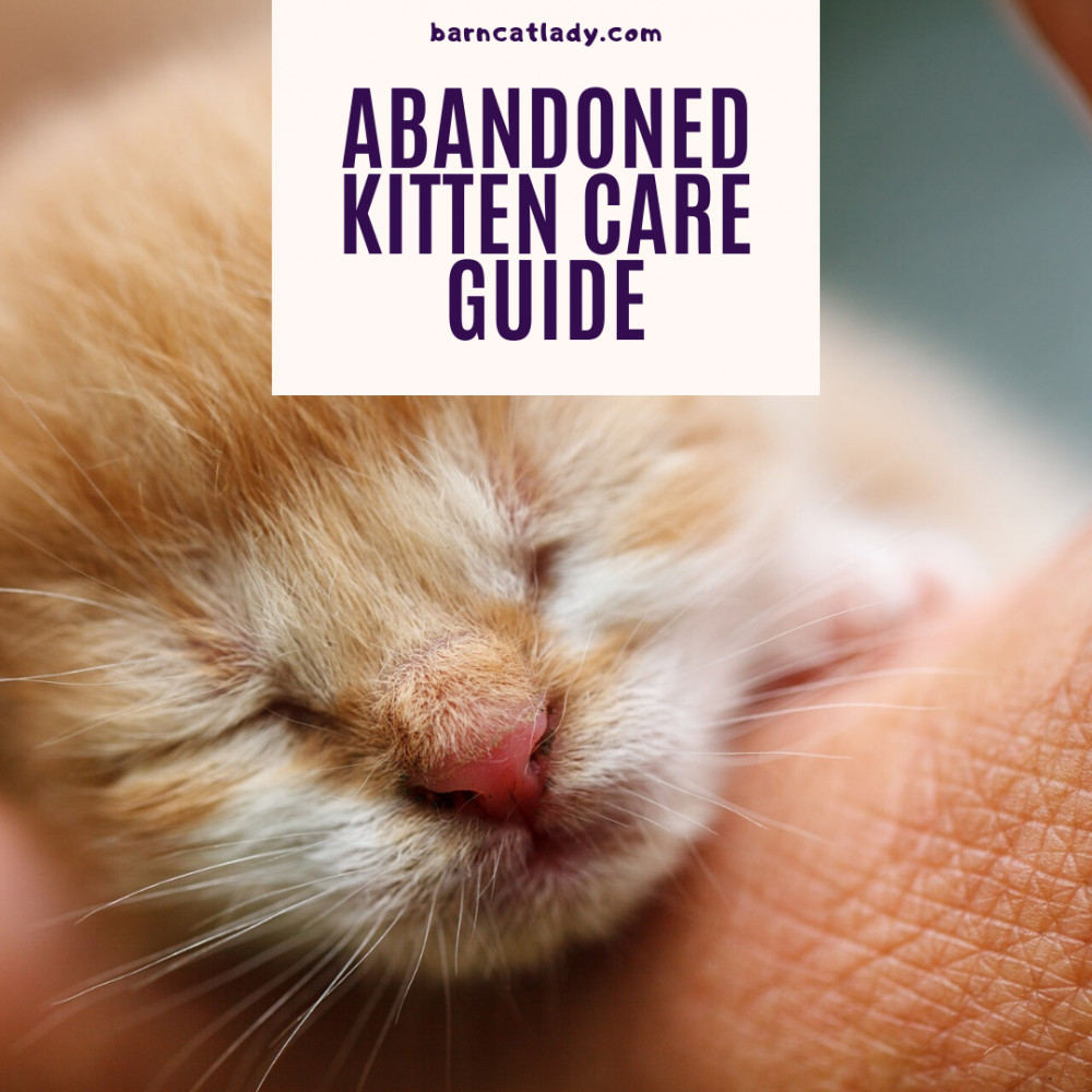 Abandoned Kitten Care Guide