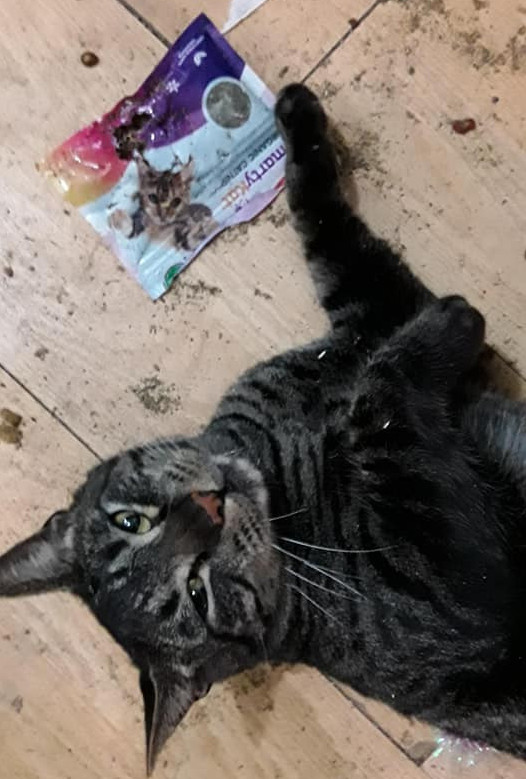 Mr. Kitty, a dark grey and black tabby, is a catnip addict.