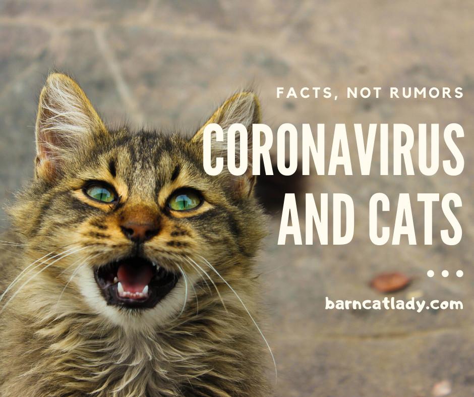 Coronavirus and Cats Graphic