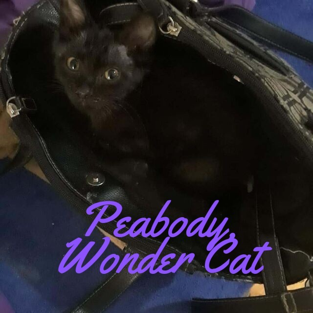 Peabody, Wonder Cat in a Purse