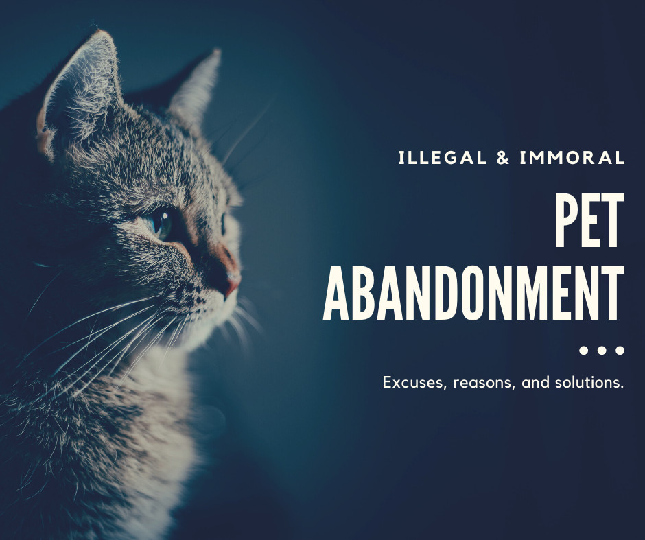 Illegal & Immoral: Pet Abandonment. Excuses, reasons, and solutions.