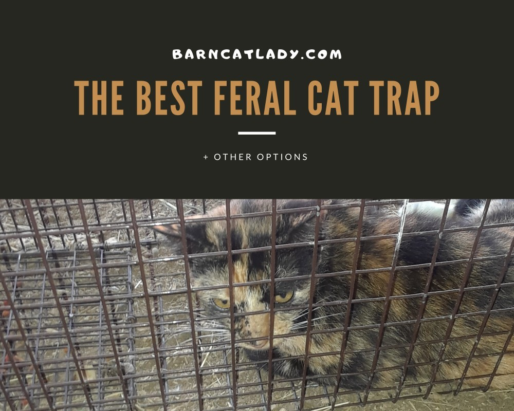 The Best Feral Cat Trap