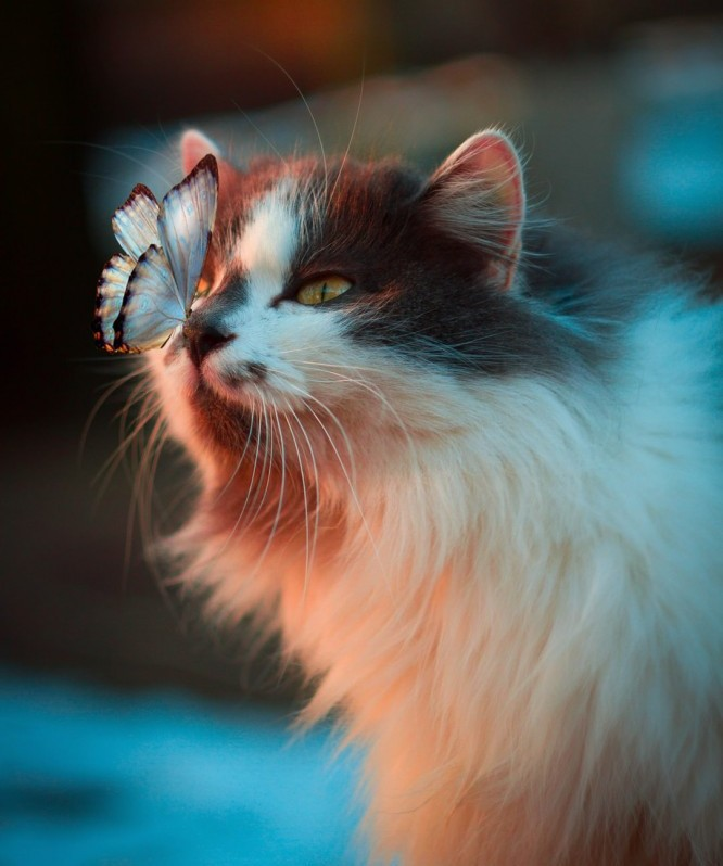 Pretty Fluffy Cat with a Butterfly on Her Nose