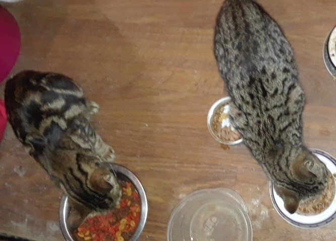 Marbles (Left) and Tweety (Right) eating on their arrival