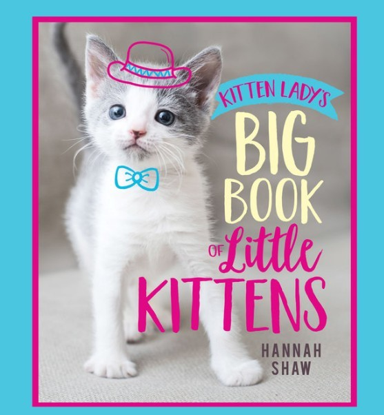 Big Book of Little Kittens Cover