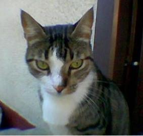 Tin Tin, my male cat