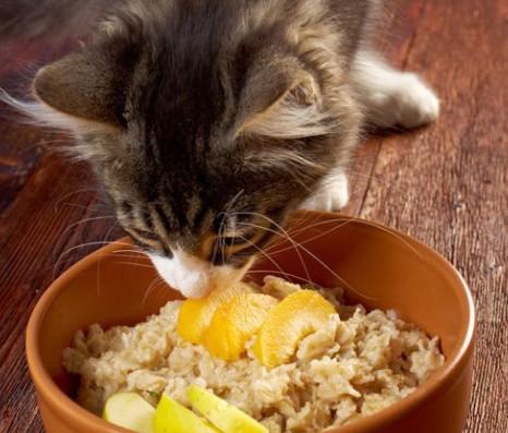 cat delights