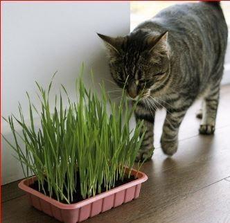 grass and kitti