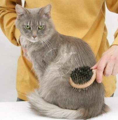 brush the cat