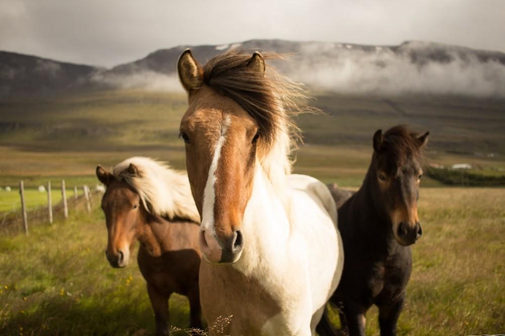Horses-field-CBD-wind-mountains