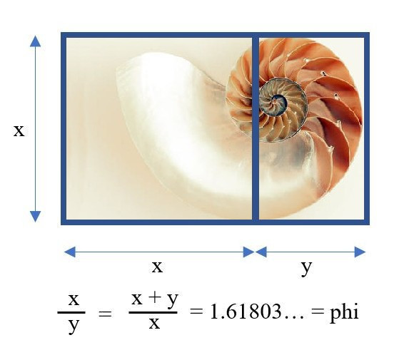 Golden ratio with shell