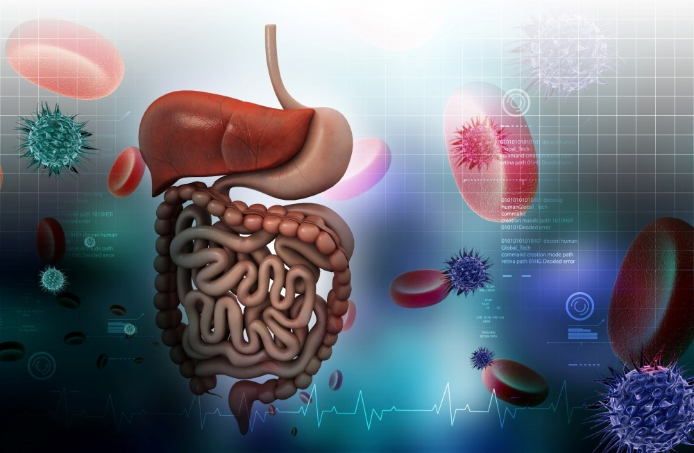 Digestive Tract and Gut Flora