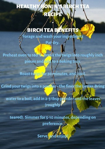 Healthy Ronin's Birch Tea Recipe for Health - Birch Tea Benefits