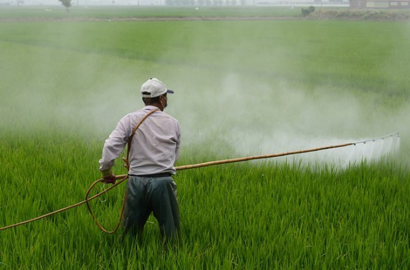farmer spraying non-organic harmful chemicals pesticides herbicides - Should You Eat Orange Peel