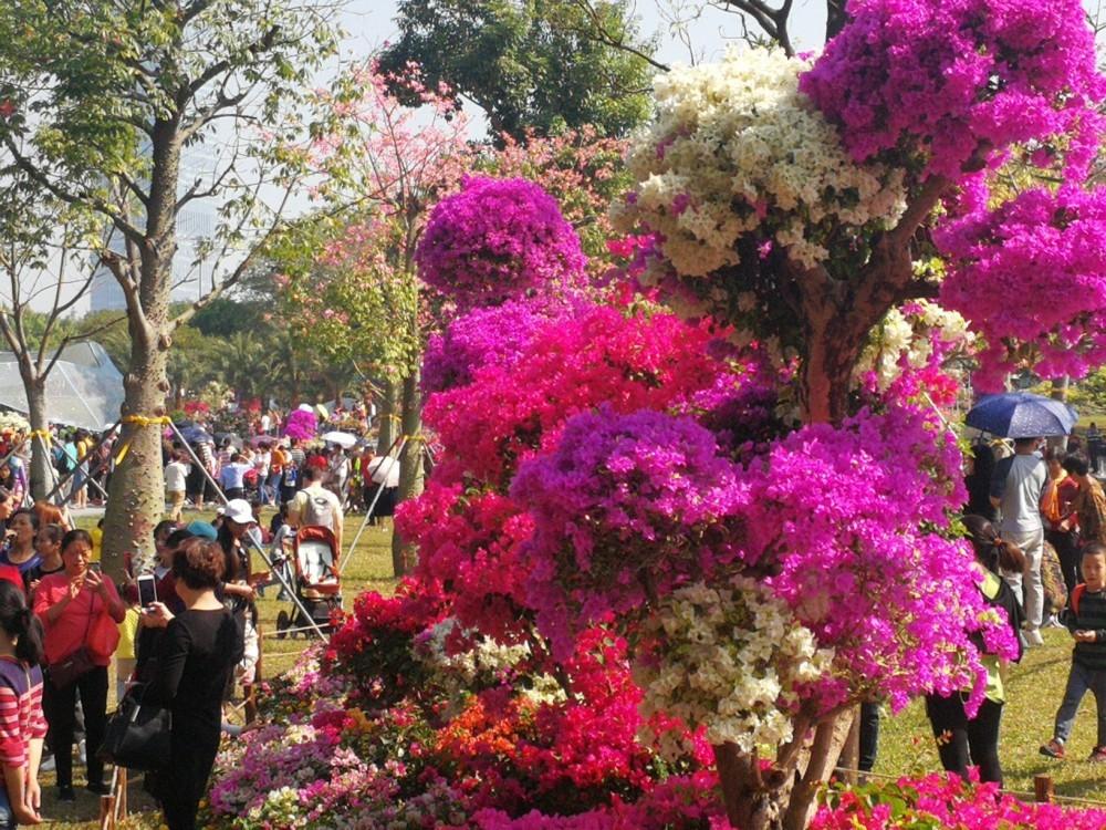 Shenzhen PCSS Flower Event 2019