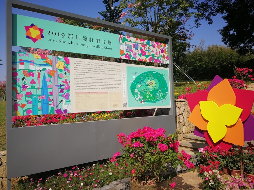 Bourgainvillea, shenzhen PCSS flower show